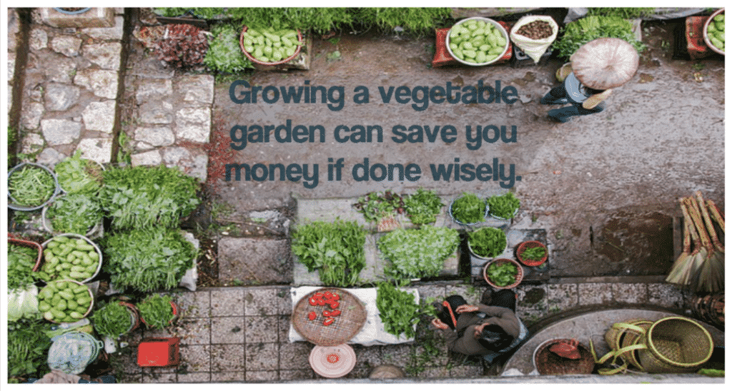 Growing a vegetable garden can save you money if done wisely.
